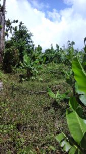 Land for Sale in Dominica-rose-anne-charles